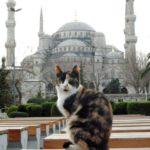 gato y mezquita