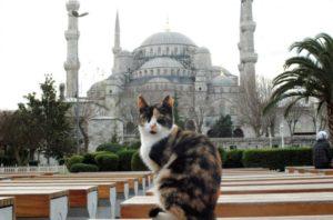 Los Gatos de Turquía